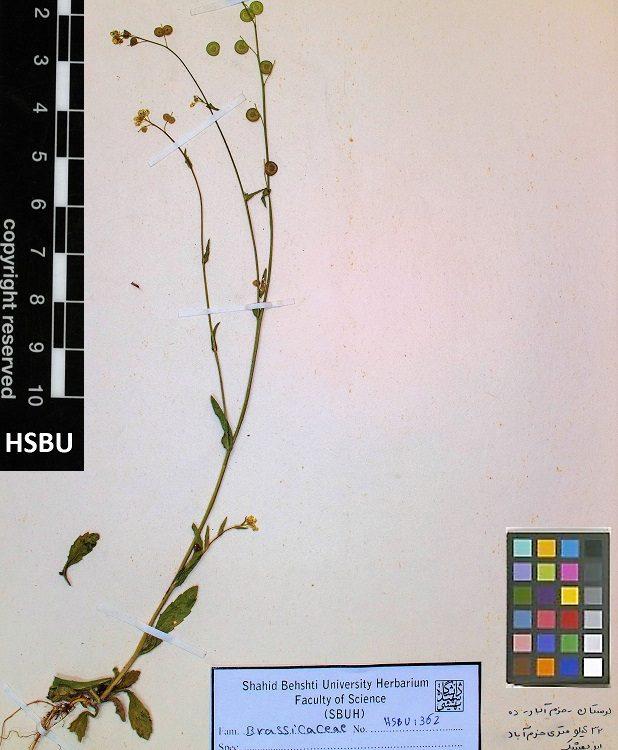 HSBU .1362