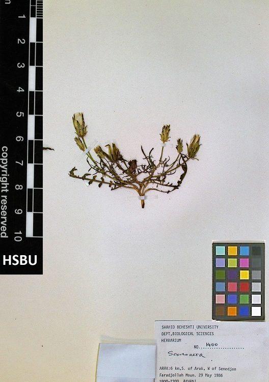 HSBU .1400