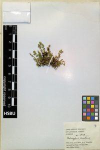 HSBU .1422