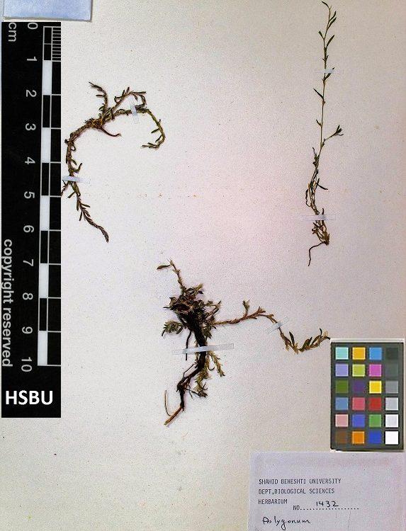 HSBU .1432