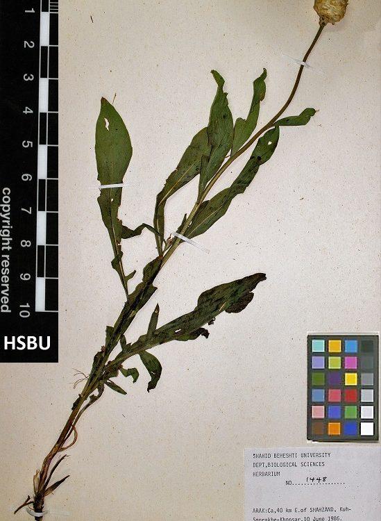 HSBU .1448