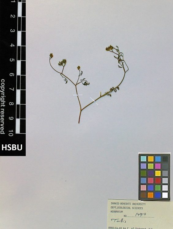 HSBU .1474