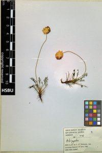HSBU .1498