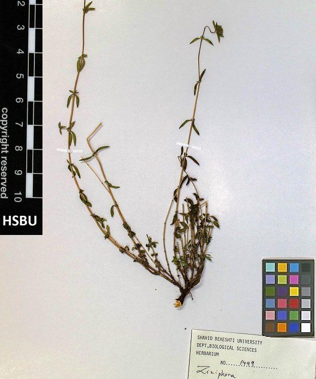 HSBU .1499