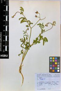 HSBU 37a