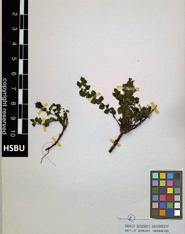 HSBU 468