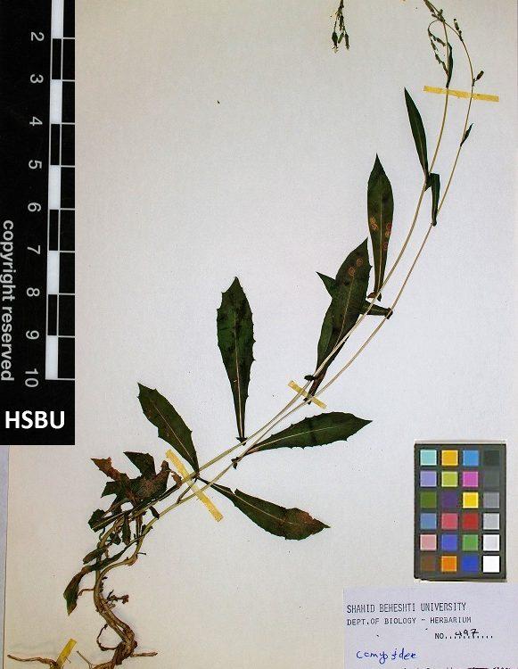 HSBU 497