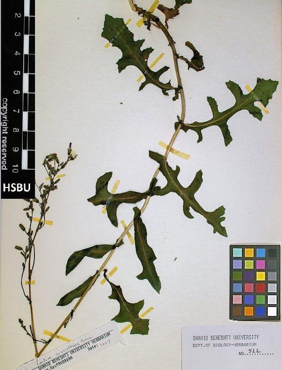 HSBU 522