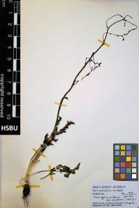 HSBU 715