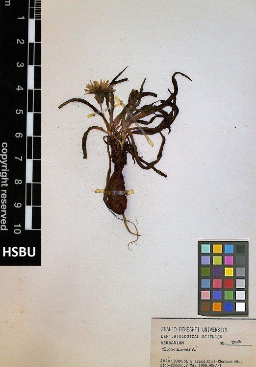 HSBU 808
