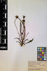 HSBU 844