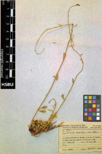 HSBU 937