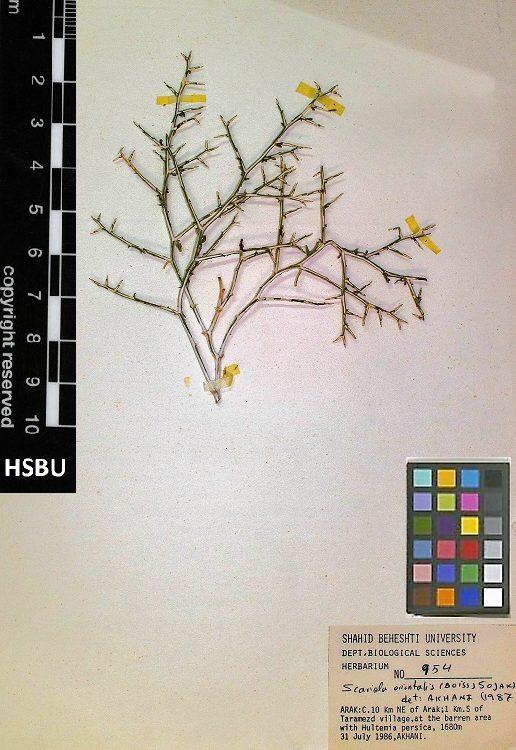 HSBU 954