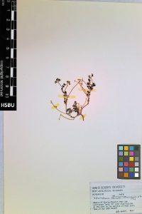 HSBU 1056