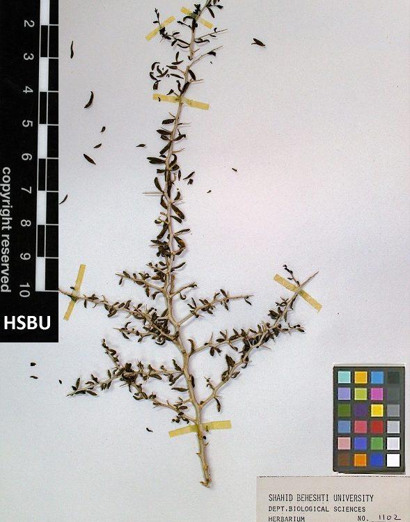 HSBU 1102