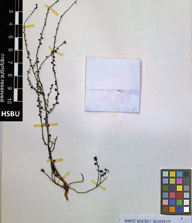 HSBU 1223