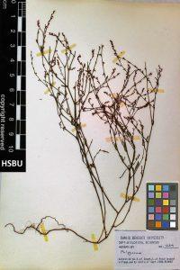 HSBU 1239