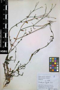 HSBU 1292