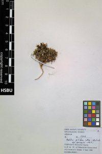 HSBU 1336