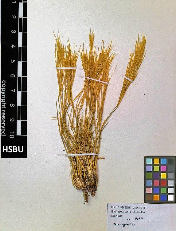 HSBU 1350