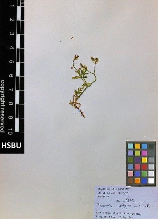HSBU 1380