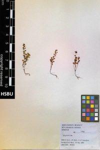 HSBU 1381
