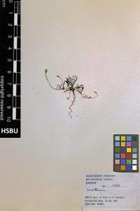 HSBU 1382