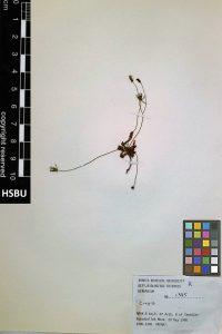 HSBU 1385