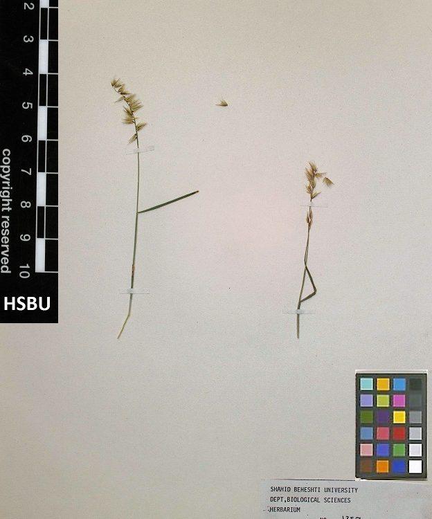 HSBU 1387