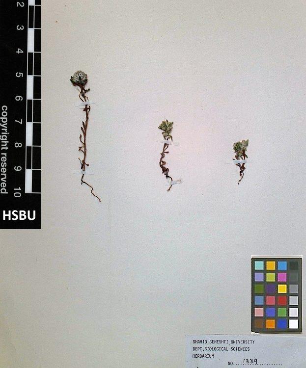 HSBU 1389