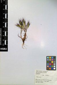 HSBU 1404