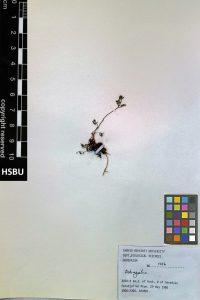 HSBU 1416