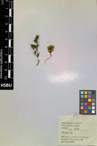 HSBU 1417