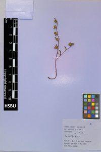 HSBU 1424