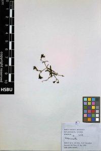 HSBU 1429