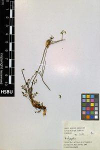 HSBU 1431