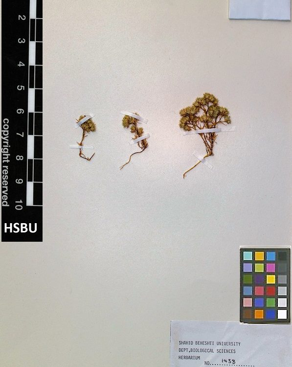 HSBU 1438