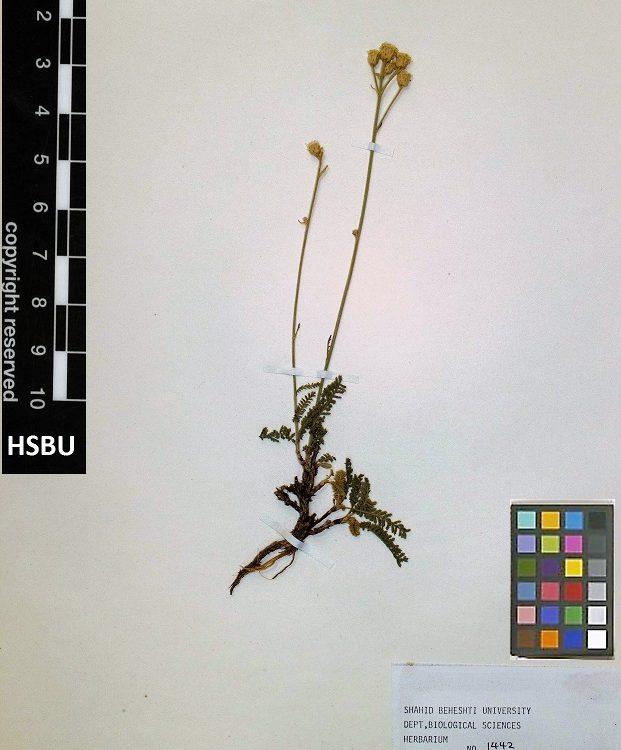 HSBU 1442