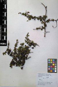 HSBU 1454
