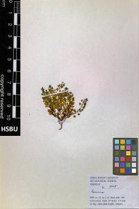 HSBU 1545