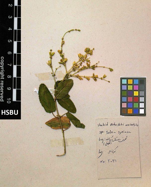 HSBU 2031