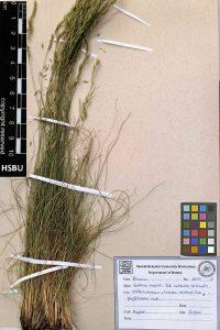 HSBU 2070