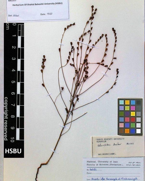 HSBU 4051