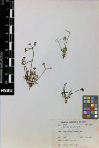 HSBU 66908