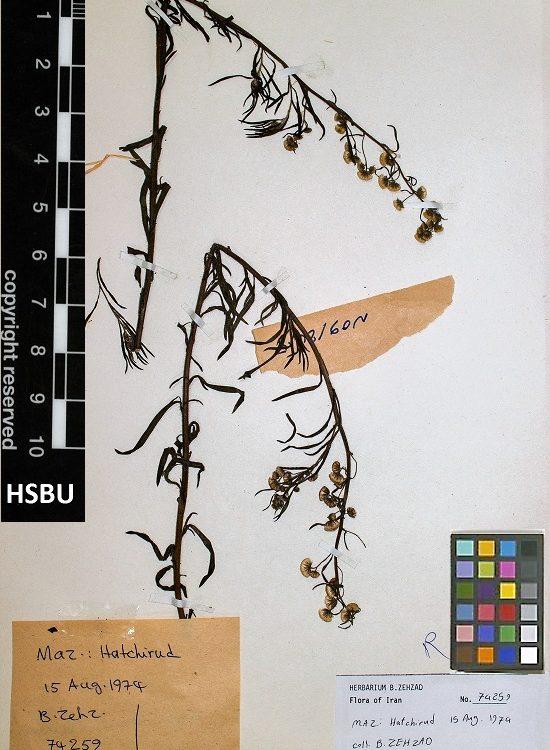 HSBU 74259
