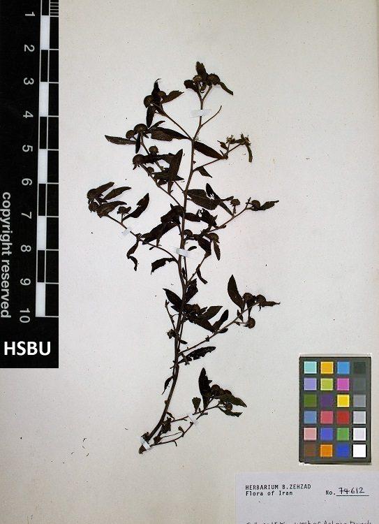 HSBU 74612