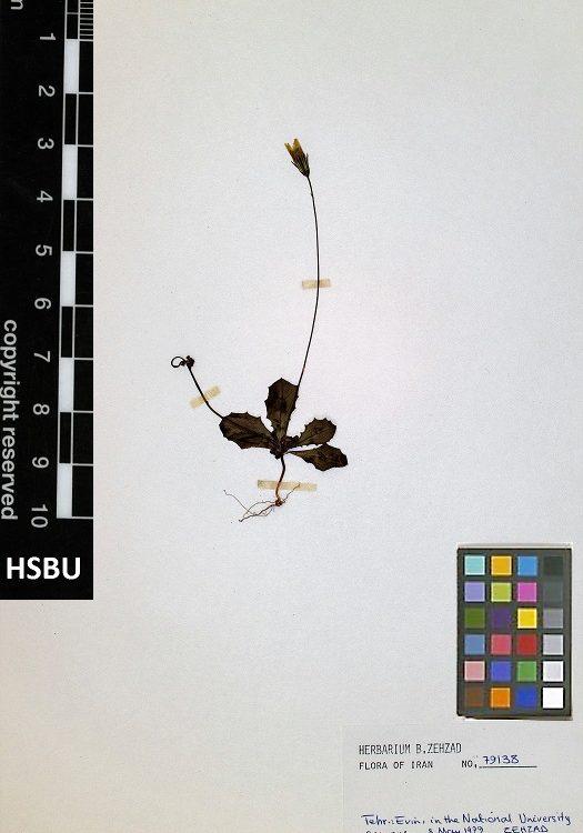 HSBU 79138