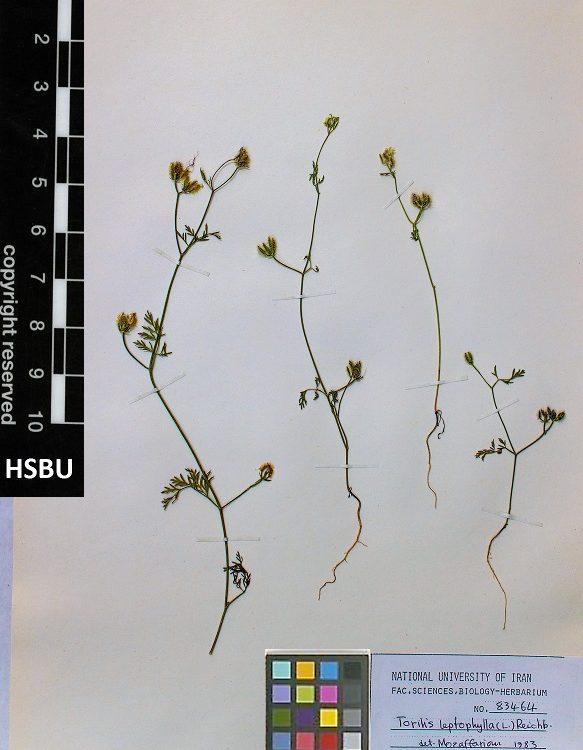 HSBU 83464