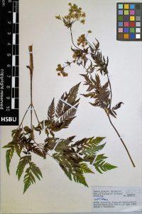 HSBU 83621
