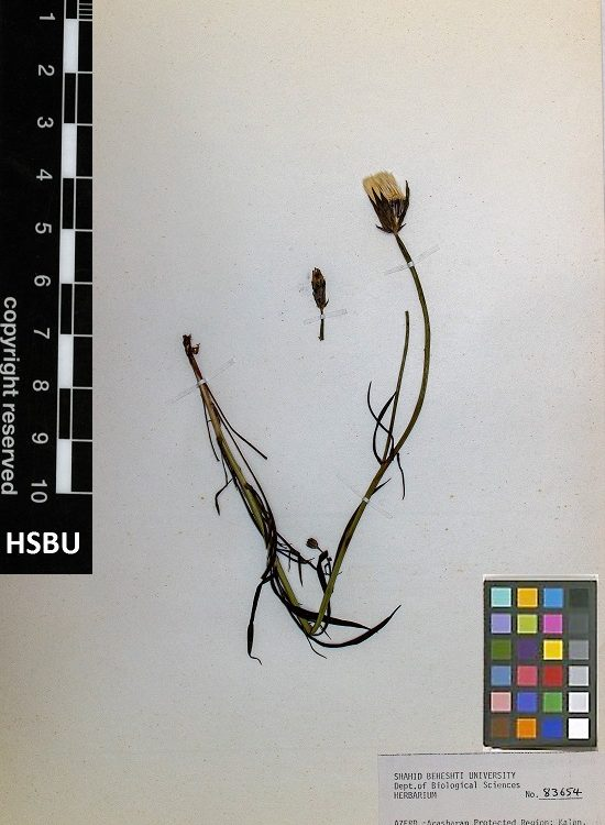 HSBU 83654